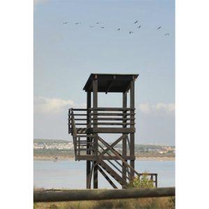 equipamiento_medioambiental_madera_torre_observatorio_aves_1